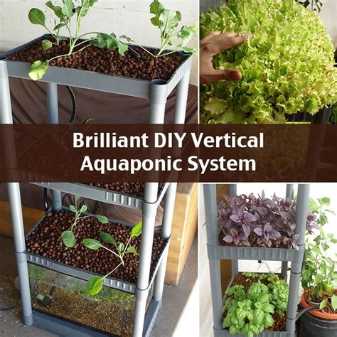 Vertical Garden Aquaponics by Brilliant Diy Vertical Aquaponic System Gardening