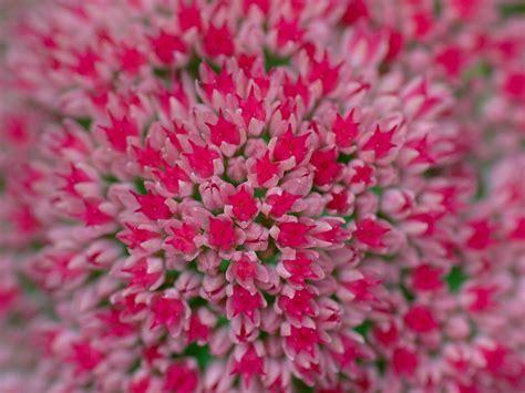 nature flower wallpaper wallpapersafari