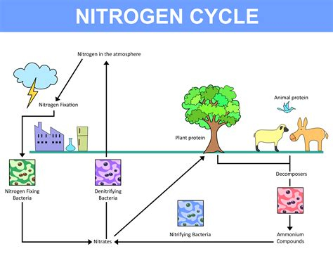 what does nitrogen do we ve changed a life giving nutrient into a deadly pollutant how can we change it back vox