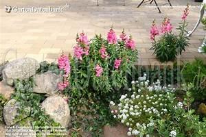 Garten Im September : garten im september was bl ht im september bilder praxis tipps ~ Whattoseeinmadrid.com Haus und Dekorationen