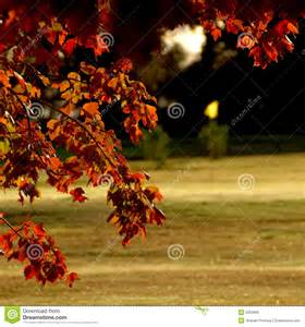 Fall Leaves On Golf Course