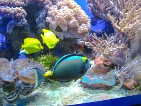 San Diego Aquarium of the Pacific