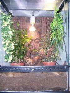 Pflanzen Terrarium Einrichten : terrarium richtig einrichten f r rotkehlanolis das terrarium ~ Watch28wear.com Haus und Dekorationen