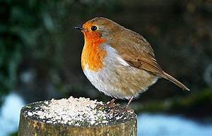 Top 10 fat animals - Round robins, fat felines and porky ...