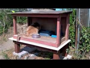 outdoor cat feeding station how to skunk proof a feral cat feeding station