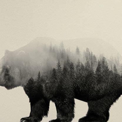 bear   mist animal silhouette   habitat