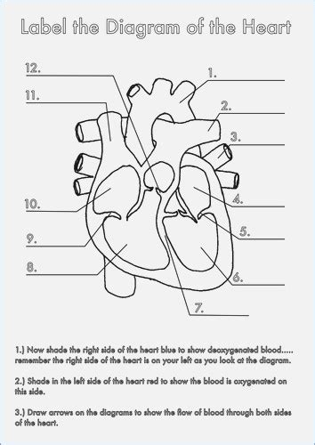 Photos Heart Diagram To Label,  Anatomy Labelled