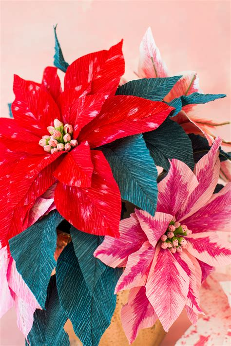 paper poinsettia flowers  house  lars built