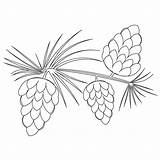 Pine Cone Coloring Tree Trees Drawing Cones Outline Pinecones Patterns Drawings Sketch Printable Embroidery Leaf Needles Pattern Omalovánky Clipart Clip sketch template