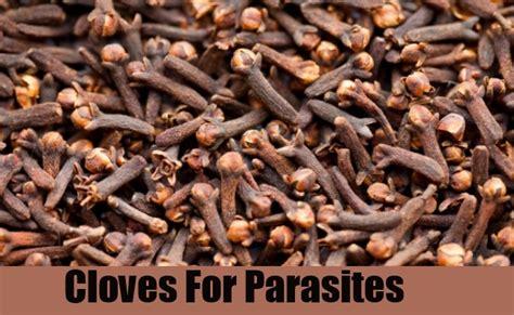 natural cures  parasites parasites infection