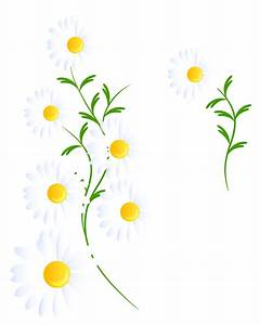 White daisys clipart - Clipground