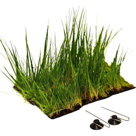 tapis chauffant pour plante tapis chauffant pour plante 28 images terra terra le sp 233 cialiste en horticulture d int