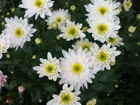 sejarah manfaat berbagai macam bunga sejarah