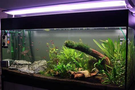 comment choisir l eclairage de aquarium
