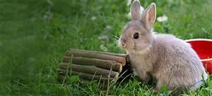 Kaninchenkäfig Für 2 Kaninchen : tierische tipps f r kaninchen ~ Frokenaadalensverden.com Haus und Dekorationen