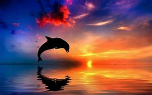 Dolphins, Jumping, At, Sunset, 65, Wallpapers, U2013, Hd, Wallpapers, For, Desktop