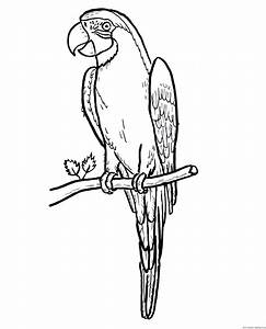 Kolorowanka Papuga Kolorowanki