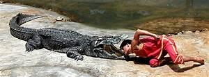 King Cobra Eating Crocodile | www.pixshark.com - Images ...