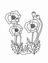 Poppy Coloring Pages Flower Poppies Carnation Flowers Printable Veterans Veteran Sheets Print Blank Template Coloringpages101 Recommended Getcolorings Holidays Popular sketch template