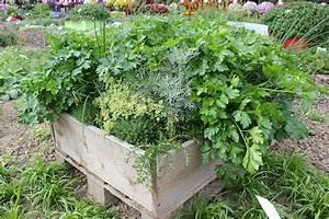 Kräuter Im Garten : kr uter im gem sebeet das sind wahre beetfreunde ~ Frokenaadalensverden.com Haus und Dekorationen