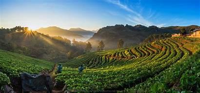 Asli Alam Thailand Fruit Farm Unduh Paling