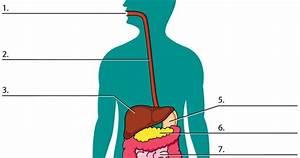 Digestive System  Label  Movie  Quiz      Kidshealth Org