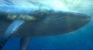 Whale | Disney Wiki | FANDOM powered by Wikia