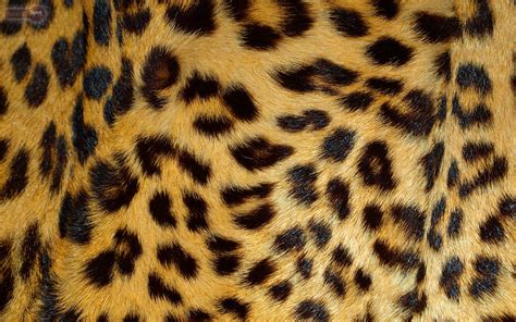 Leopard Animal Print Wallpaper - animal print desktop backgrounds 183