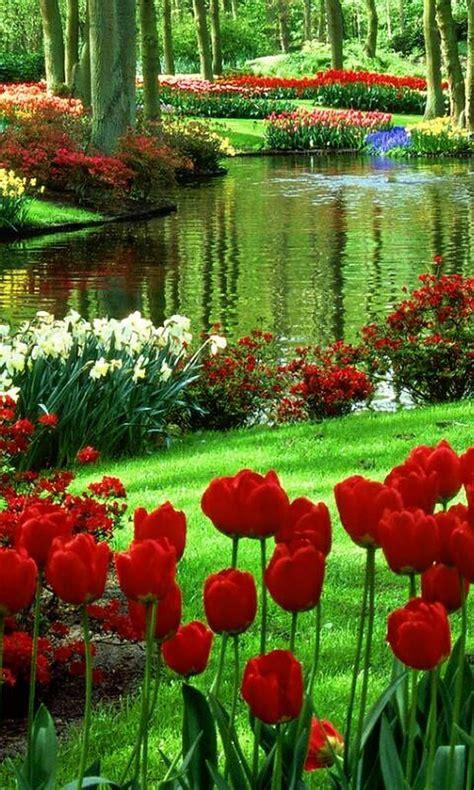 Best 25 Flower Garden Pictures Ideas On Pinterest