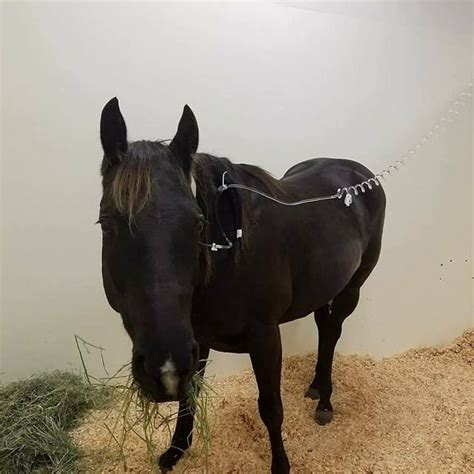 potomac horse fever reported  clark county horse
