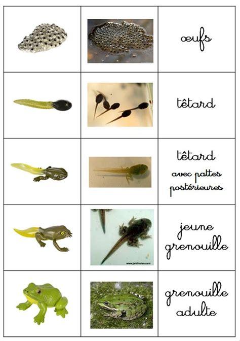 les 16 meilleures images 224 propos de grenouille sur