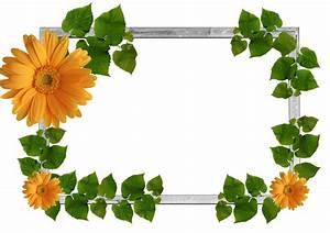 Free Flowers Graphic Frames | Orange-Flowers-and-Green ...