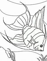Fish Coloring Angel Sea Floor Dive Into Pages Coloringsky Colouring Sheets Drawings Drawing Water Sky Fische Gemerkt Von sketch template