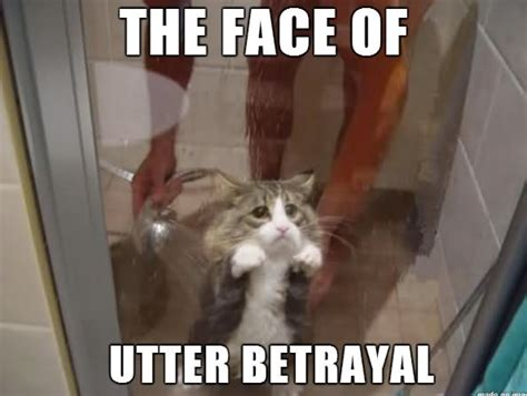 funny betrayal why sad meme face utter cats showering humans served master animals well cat cute give they betrayed guy