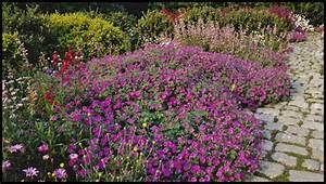 Plantes Vivaces Pour Massif : les fleurs le garrit ~ Premium-room.com Idées de Décoration
