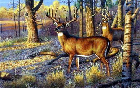 artist cynthie fisher unframed whitetail deer print beanfield buck wildlifeprintscom
