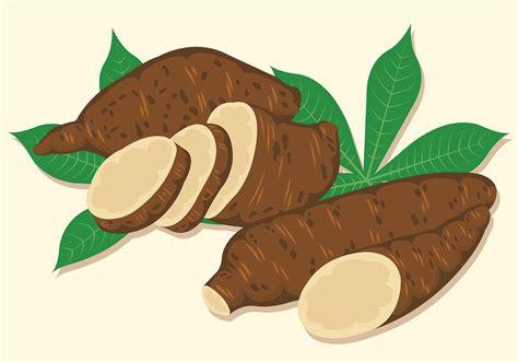 Clipart Vector by Vector Illustration Of Cassava Free Vector
