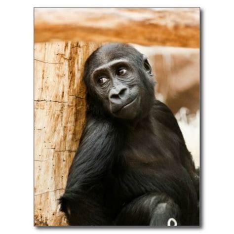 Baby Gorilla Monkey