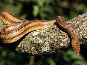 Snake   The Biggest Animals Kingdom