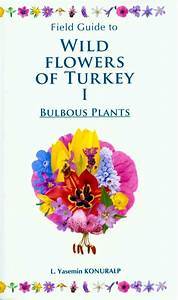 Field Guide To Wild Flowers Of Turkey  Volume 1  Bulbous