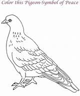 Coloring Pages Pigeon Popular sketch template