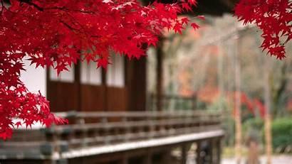 Japan 4k Wallpapers Desktop Background Nature Mobile