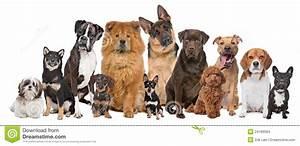Un Gruppo Di Dodici Cani Immagini Stock Immagine: 24189584