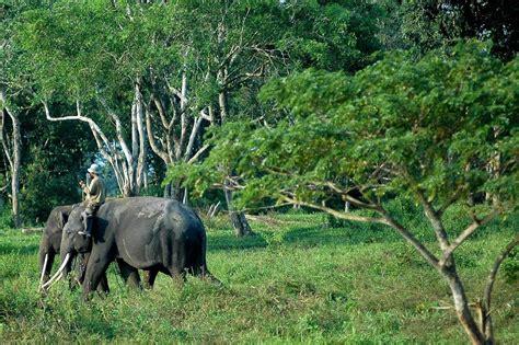 Puzzle Kayu Persegi Binatang Hutan artikel kumpulan tugas sekolah flora dan fauna langka di
