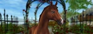 welches stable pferd passt zu dir
