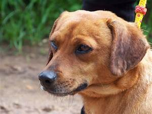 Small dogs Avai... Dogs For Adoption
