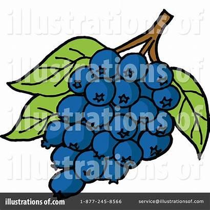 Clipart Blueberries Illustration Lafftoon Royalty Rf