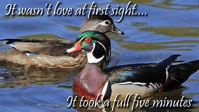 Duck Meme Lyn Stacy Harris Bio Short