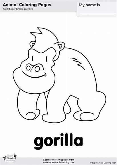 Gorilla Coloring Simple Super Animal Worksheets Learning