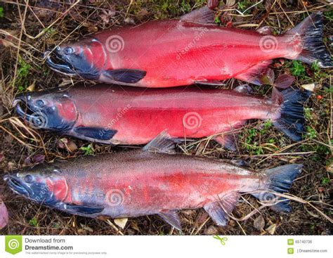 Which Is More Nutritional? Salmon Or Trout?